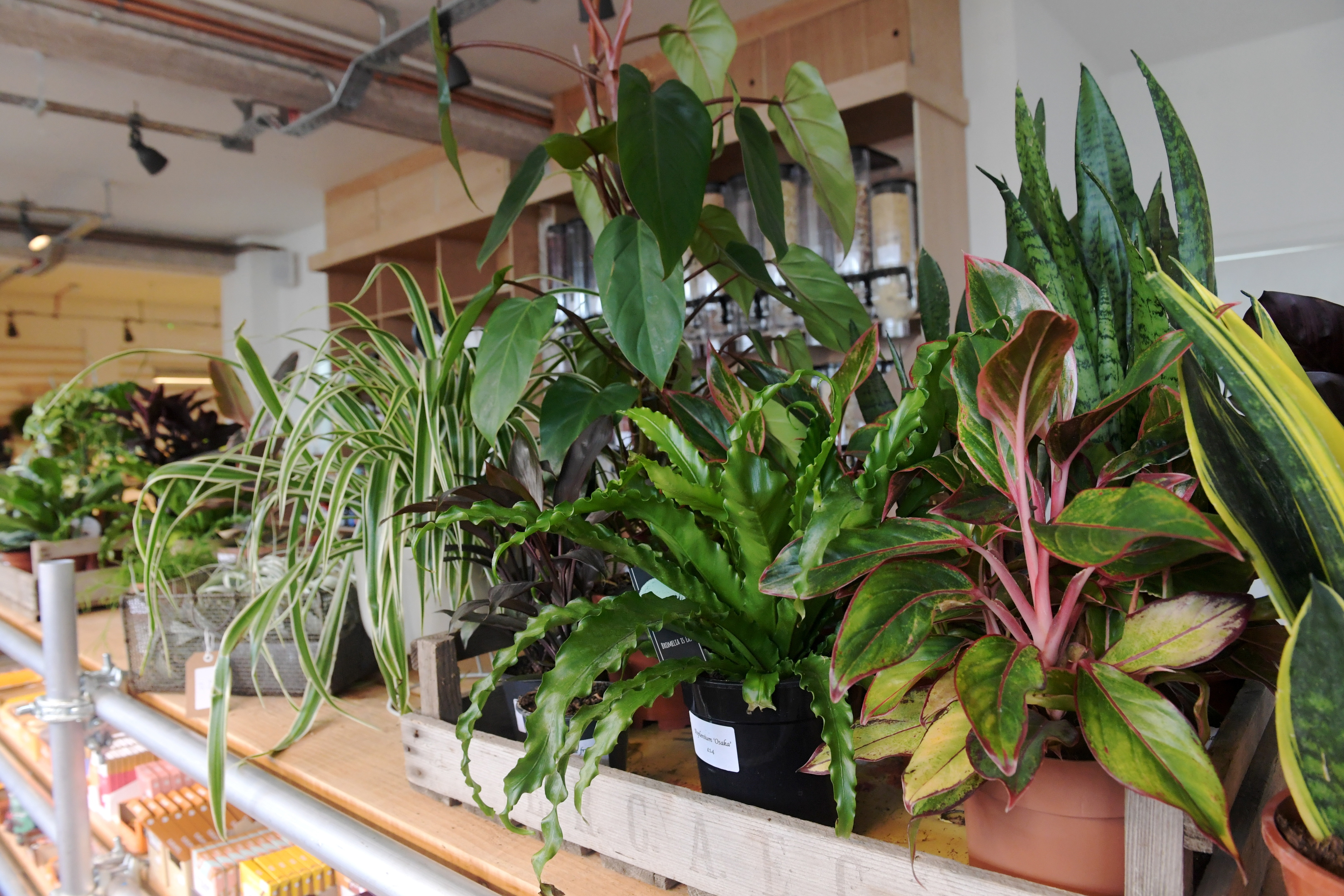 How To Create An Exotic Paradise In Your Home With The Potting Shed Society