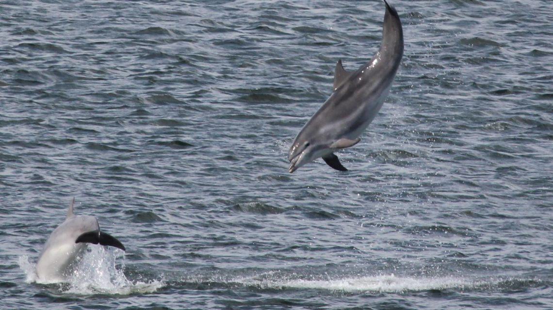Things to do in Aberdeen and Aberdeenshire: Go dolphin ...