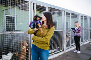 Aberdeen animal shelter launches shoe box appeal for Christmas