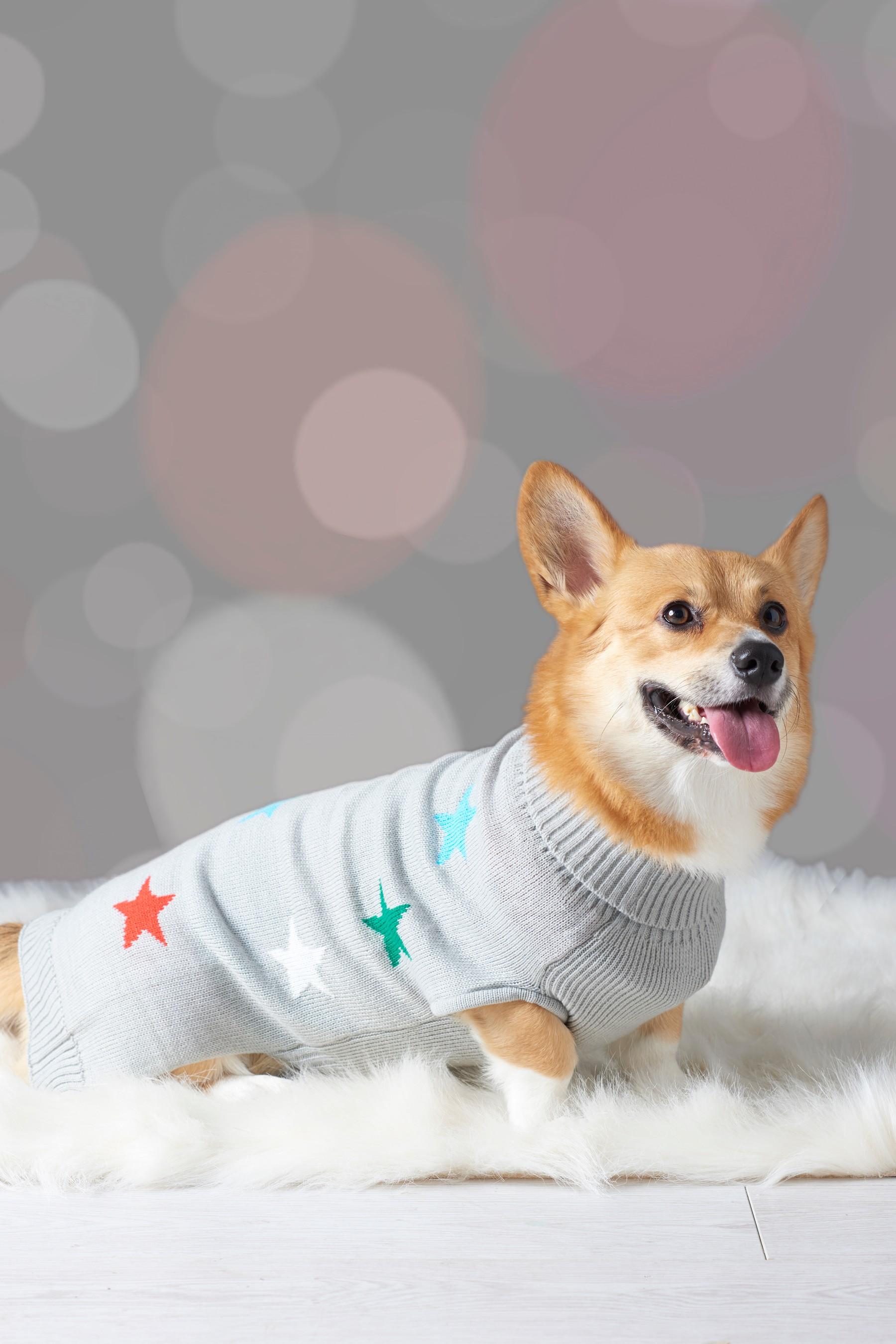 Christmas Dog Jumpers To Buy In Aberdeen Society