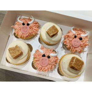Aberdeen baker creates Highland Cow cupcakes for Burns Night
